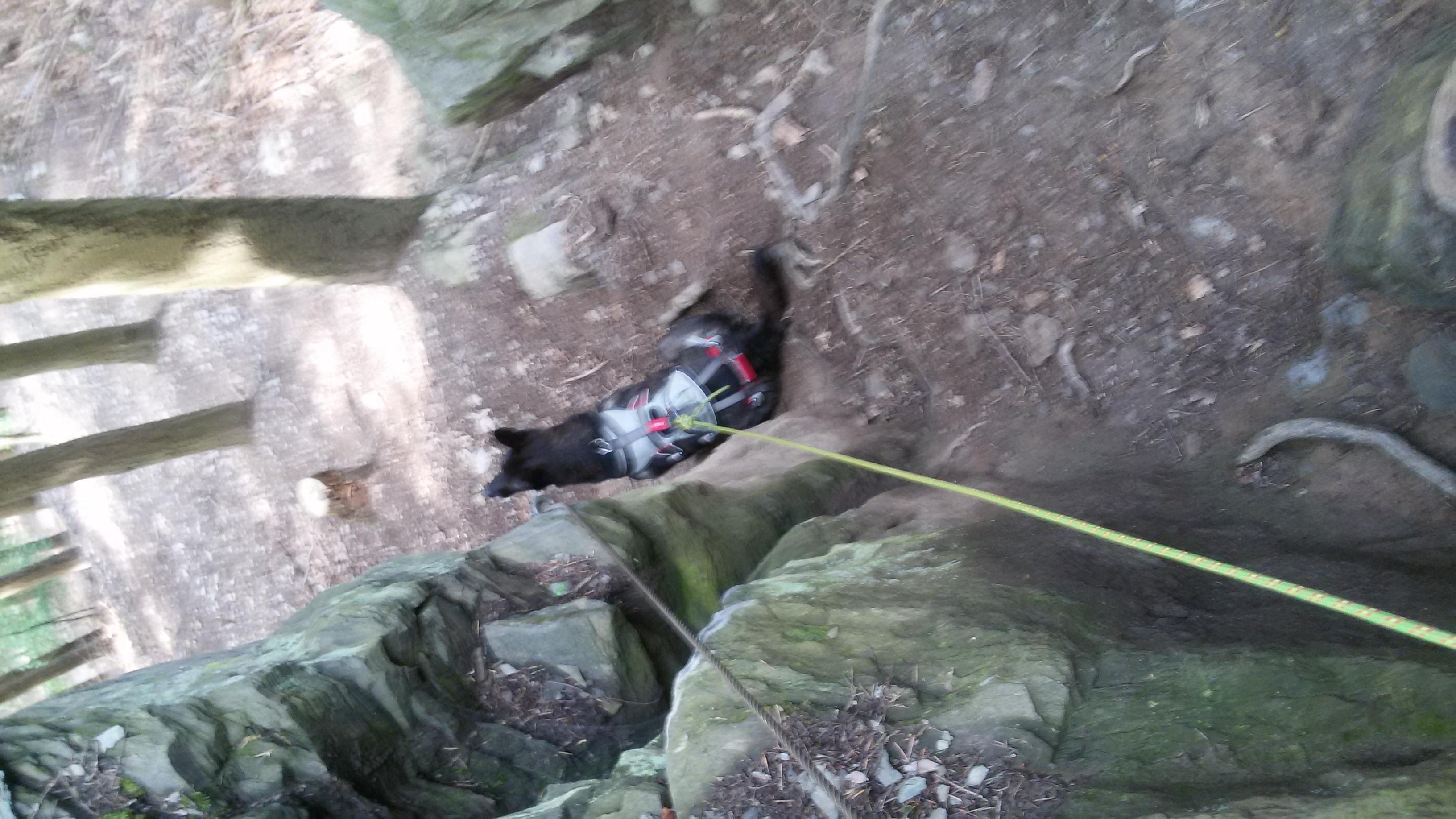 Klettergurt Hund : Mosel u riol klettersteig mit hund tommy s und nemo
